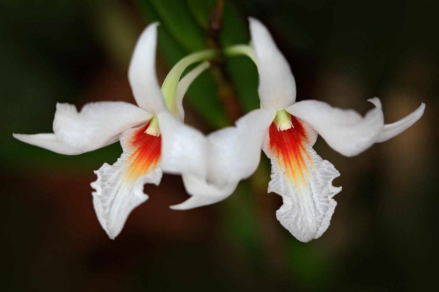 Makro fotografie; Ondrej Prosicky; Fata Morgana; orchidej