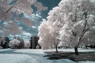 Snímek pořízený přes infračervený filtr