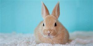 Čím krmit králíky?