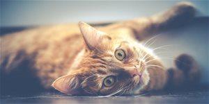 Mačka v byte – ako na spokojné spolunažívanie