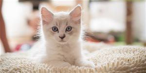 Mačiatka – ako sa o ne dobre starať