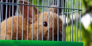 Plemená králikov