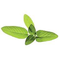ClickAndGrow OU semínka Šalvěj lékařská - Sazenice