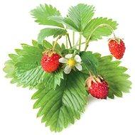 ClickAndGrow OU semínka Lesní jahoda - Sazenice