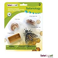 Lebenszyklus - Bee