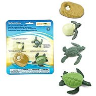 Life cycle - Sea Turtle