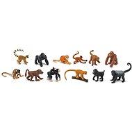 Tuba - Primates and Monkey