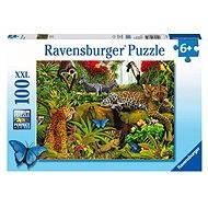 Ravens Wild Jungle
