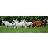 Running horses panoramic