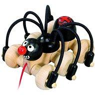 Bonaparte Čierny pavúk