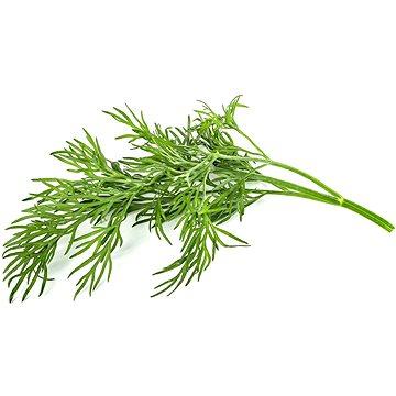 Click and Grow Kopr (SGDL)
