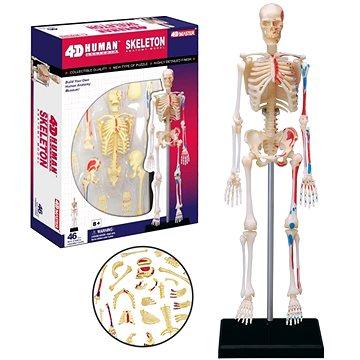 Anatomie člověka - kostra (4893409260597)