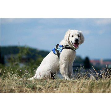 Pestrá - Pestrá psí školka budoucích asistenčních psů