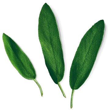 Plantui Sage (H013)