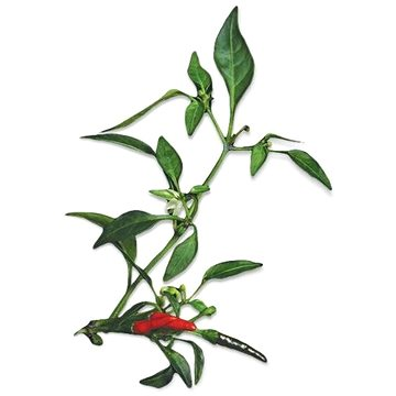 Plantui Chili Demon Red (F010)